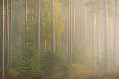 New Forest Autumn 2018 (Stu Meech) Tags: new forest mist sun fog sunrise autumn hampshire nikon d750 tamron 100400 leefilters polariser