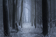 In the blizzard (Petr Sýkora) Tags: les sníh zima forest nature winter snow blizzard