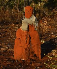 Stuart Highway (andymag) Tags: termite mound australia stuart highway outback