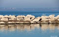 Les Mouettes Martégales (Bernard C **) Tags: canon france provence paca provencealpescôted'azur bouchesdurhône martigues mouette digue étang étangdeberre seagull dike pond