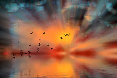 Surreal 5 (Wim Koopman) Tags: birds flight flying light beams strong colors surreal water pool lake reflection digital art