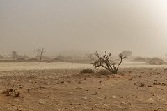 _RJS4524 (rjsnyc2) Tags: 2019 africa d850 desert dunes landscape namibia nikon outdoors photography remoteyear richardsilver richardsilverphoto safari sand sanddune travel travelphotographer animal camping nature tent trees wildlife