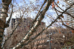 Klyde Warren Park (bass3587) Tags: klydewarrenpark pentaxk1 pentaxdfa28105mm cloudy sun park people pets christmas outdoors camera bells trees kids family events buildings museum pentax 28105