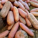 Pumpkin patch, Moorpark, CA thumbnail