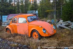 VW Beetle (DSC_9635vk) (Villi Kristjans) Tags: vilmundur vk villi vkphoto kristjansson kristjans kristjáns kristjánsson old outdoor trip travel sverige svíþjóð sweden color colour digital d3200 nikon norrbotten pajala tree trees november 2018 vw beetle car orange
