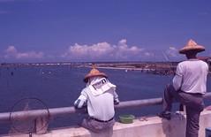 台南七股 (柯金源) Tags: 柯金源 牡蠣