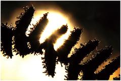 Winter impressions (na_photographs) Tags: fern farn kalt cold frozen ice eis kristall gegenlicht