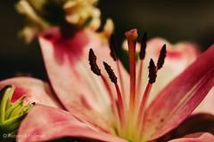 Arrangement. #Takoma #dc #dclife #washingtondc #canon #rebelxs #realcamera #Canon #EFS60mm #macro  #flower #flowersofinstagram (Kindle Girl) Tags: realcamera takoma dc dclife washingtondc canon rebelxs efs60mm macro flower flowersofinstagram
