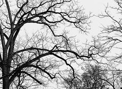 verzweigung (elmar theurer) Tags: rot fotografie karlsruhe baum bäume natur landschaft äste erdtöne pflanzen wetter stille ruhe winter landschaftsaufnahme stimmung stimmungsvoll jahreszeiten symbol leben atmosphere nature tree silence spring plants weather landscape seasons season quietness quiet calm tranquillity peace outdoor pflanze branches ast