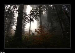 au coeur de la Forêt dans la Brume - Myon (francky25) Tags: au coeur de la forêt dans brume myon ambiance automne franchecomté doubs