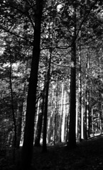 (eelend) Tags: black white buckow autumm sunlight shadows backlight trees forest nature