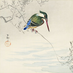 A kingfisher (1920) by Ohara Koson (1877-1945). Original from The Rijksmuseum. Digitally enhanced by rawpixel. (Free Public Domain Illustrations by rawpixel) Tags: pdproject21batch2x otherkeywords tagcc0 animal antique art asian bird drawing illustration japan japanese kingfisher koson museum ohara oharakoson old paint rijksmuseum vintage