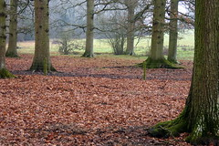 A Winter's Walk (Alan1954) Tags: walking nature woods winter 2018 sussex