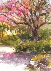 Pink Flowers (Sherry Schmidt) Tags: art painting pleinair watercolor watercolour landscape losangeles arboretum arcadia california city garden gardening trees pink flowers