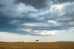 Masai Mara National Park, Kenya (Ðariusz) Tags: masaimaranationalpark kenya masai mara national park africa east eastafrica amazing animals sunset sky grass landscape animal road sand beach field freelance