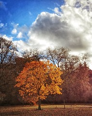Colours of the world (siasia.k) Tags: oxfordshire bibury tree autumn landscape nature unitedkingdom england