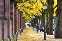 Herfst 2018 (Roel Wijnants) Tags: hefst bomen muur kleuren bladeren roelwijnants roelwijnantsfotografie wandelen fietsen denhaag thehague hofstijl haagspraak absolutelythehague lovethehague thisisthehague gebruiksvoorwaardenlezen cityilove cityfolk