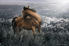 Cerro La banderita, La falda, Argentina (Leo Davicino) Tags: horse caballo landscape argentina canon animal nature light outside national