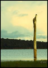 Kaudulla Tree (dinukakavinda) Tags: tree kaudulla national park reservoir sun set d7200 18 140 dinuka kavinda sri lanka lankan srilanka srilankan wildlife safari twilight travel landscape water old trunk