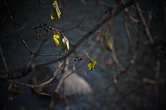 stone, branches, river's light, 2/4 11-10-18 (wbhmatthies) Tags: leaves branches stone rivers light backlighting fruit