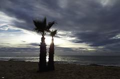 Palmeras a contraluz (candi...) Tags: palmeras playa arrena agua naturaleza nature cielo nubes samsunga5 airelibre