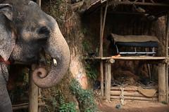 Munnar.India (VincenzoMonacoo) Tags: canon 6d tamron 2470 india travel adventure nature leica nikon munnar kerala elephant ngc
