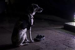 Incondicional. (AviAntonio) Tags: gos perro fira feria sabatilles zapatillas amic amigo