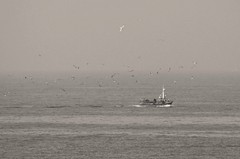 El acompañamiento (carlos_ar2000) Tags: barco bote nave ship boat pesca fishing gaviota seagull vuelo fly ave pajaro bird naturaleza nature mar sea cascais portugal niebla fog mist