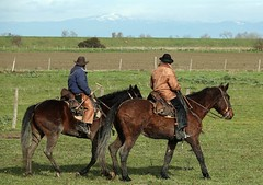 "Questa è ""Maremma"" - This is ""Maremma"" (Jambo Jambo) Tags: cavalli horses butteri cowboys parcoregionaledellamaremma parco park alberese grosseto maremma maremmacountryside maremmatoscana toscana tuscany italia italy cavallo horse jambojambo sonydscrx10m4 inverno winter"
