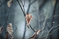 My heart was quiet (undefinable moods) Tags: leaf leaves branches tree frozen coldday bokeh bokehlicious dof quiet quote poem poetry nature naturaleza naturephotography natur outside outdoor countryside forest woods