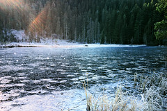 Eisblumen auf dem Karsee (MHikeBike) Tags: wald berge wasser bäume nationalpark schwarzwald nordschwarzwald murg murgtal baiersbronn huzenbach schönmünzach wandern wege ruhe berg radweg fahrrad weg