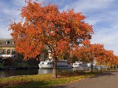 A walk along the Ruhr. (Christa_P) Tags: nature flora tree baum wasser water river ruhr fluss schiff boat mülheimanderruhr germany