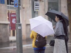 Crosswalk in the Rain (zeevveez) Tags: זאבברקן zeevveez zeevbarkan canon people rain jaffastreet umbrella