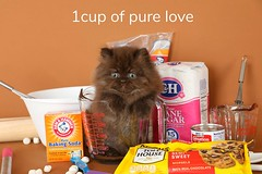 Cute Kitten Pictures (dollfacepersiankittens.com) Tags: chocolate chocolatepersiankitten chocolates persiankittens persiankittensforsale persian cats catsofinstagram catpictures cattery catstagram cute cutekittenpictures cutecatpictures doll face kittens
