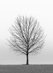 Fog And A Tree (Roy Manchester) Tags: catskill newyork unitedstates us 5dmk4 ef70200f28isiiusm 7020028lisii availablelight blackwhite hudsonvalley hudsonriver llenses longexposure landscape light manfrotto canon catskillnewyork canonllenses fog geotag gps leaves interesting minimalism greenecountyny