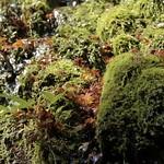 fallen leaves thumbnail