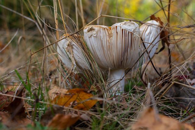 Die Welt der Pilze  (31)