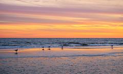 Sunset Seagulls (djrocks66) Tags: sunset sunsets oceanscape oceanscapes waterscape waterscapes nature outdoors beach ocean waves seagulls fishing color sky clouds sand clams shells stones dunes shore sea seashore boating nikon z6 pink orange sun landscapes