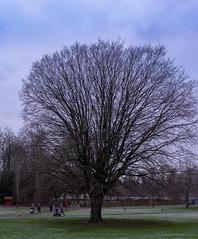 winter tree (Rourkeor) Tags: 35mm 35mmzeisssonnartlens carlzeiss eastrenfrewshire rx1r roukenglenpark scotland sony tree uk branches cold frost fullframe winter glasgow unitedkingdom gb
