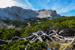 Čvrsnica mountain, Bosnia and Herzegovina (HimzoIsić) Tags: landscape mountain mountainside wood plant hill conifer sky blue ridge outdoor nature wild rock ngc