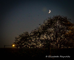 Day 315. (lizzieisdizzy) Tags: night nightime nightsky moon crescentmoon treesillouette sunset lamp lamplight glow lunarphase waningcrescent