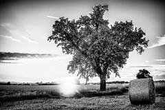Tree & Sunset... (Ody on the mount) Tags: abendlicht anlässe bäume em5ii fototour hdr himmel licht lichtstimmung mzuiko2518 omd olympus pflanzen schwäbischealb sonnenuntergang wolken bw clouds light monochrome sw sunset tree