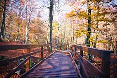 Montseny Parc Natural (raidtxujones) Tags: montseny barcelona nature photography park autumn fall leafs footpath bridge