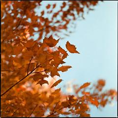 Autumn Intermission III (__Daniele__) Tags: hasselblad 500cm analogue analog film expired c41 konica minolta 160 2003 6x6 120 medium format mittelformat square planar 80mm