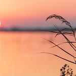 Pink Soft Morning thumbnail