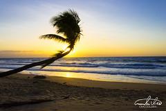 Sunrise at Mission Beach (Theo Crazzolara) Tags: missionbeach australia queensland palm tree palmtree natural sunrise sunset nature landscape scenic scenery beautiful paradise holiday vacation tropic tropical