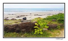 green plants (harrypwt) Tags: harrypwt gabon coastal green plants africa afrika centralafrica paintinglike samsungs7 s7 smartphone