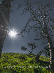 Andorra mountain landscape: Altitude 2000+ collection. La Massana, Vall nord, Andorra (lutzmeyer) Tags: andorra colldelabotella europe gebirge iberia iberianpeninsula lamassanaparroquia lutzmeyer pal pirineos pirineus pyrenees pyrenäen seturia vallnord altitude2000collection backlight baum berge bergpfad bild cami camisrutes contraluz estiu foto fotografie fussweg gebirgszug gegenlicht iberischehalbinsel image imagen imatge juli julio juliol july landscape landschaft lutzlutzmeyercom mfmediumformat montana montanas mountains muntanyes natur natura nature paisaje paisatge parroquia pflanzen photo photography picture plantas plants rural sommer sonnenaufgang sortidadelsol summer sunrise tal tree valley verano village lamassanavallnord