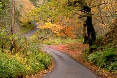 And looking from the opposite direction...... (odell_rd) Tags: rugleyburn alnwick northumberland autumn ford coth5