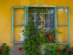 (Dijana Dixy) Tags: natureinfocusgroup saariysqualitypictures window flowers flower house orange red